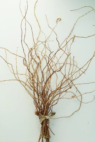 Natural curly willow branches