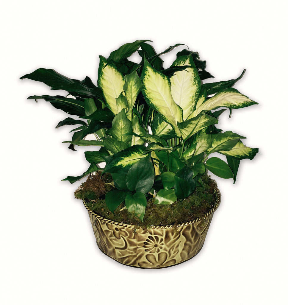 Indoor Planter Tin