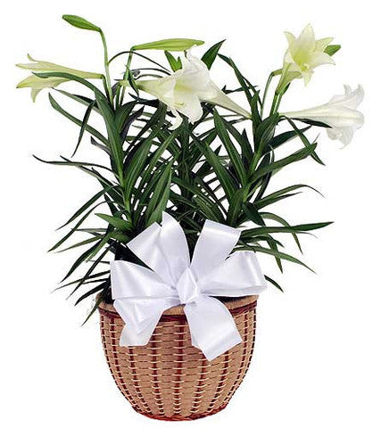 Easter Lily Planter