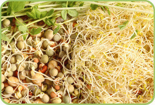 Crunchy Herb Sprout Salad Mix