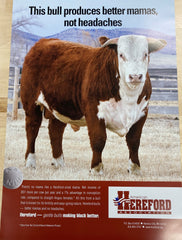 Hereford Posters - Past Editions