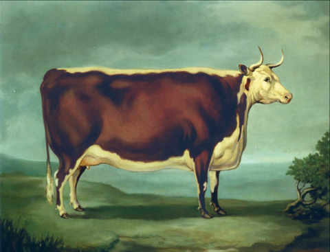 The Silver Cow Historic Hereford Print