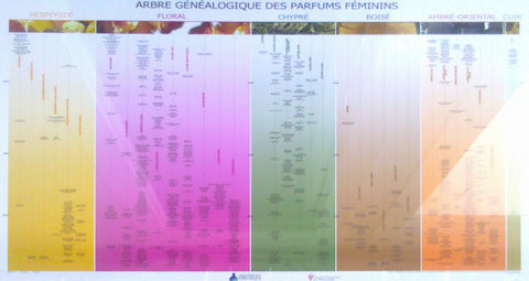Official Genealogy Poster by the Osmotheque & French Society of Perfumers – Feminine Version