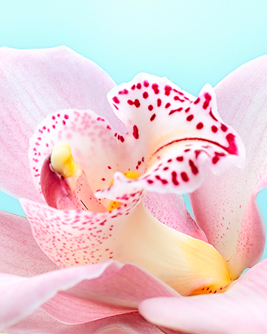 Academy Membership – Orchid Level