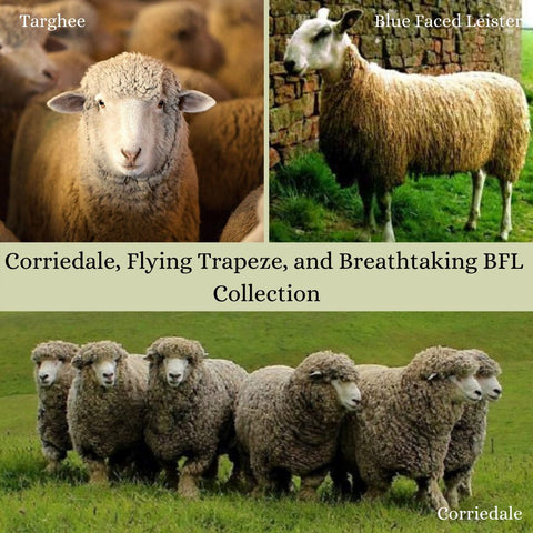 ASAP: Breathtaking BFL, Flying Trapeze and Corriedale, Ready to Ship