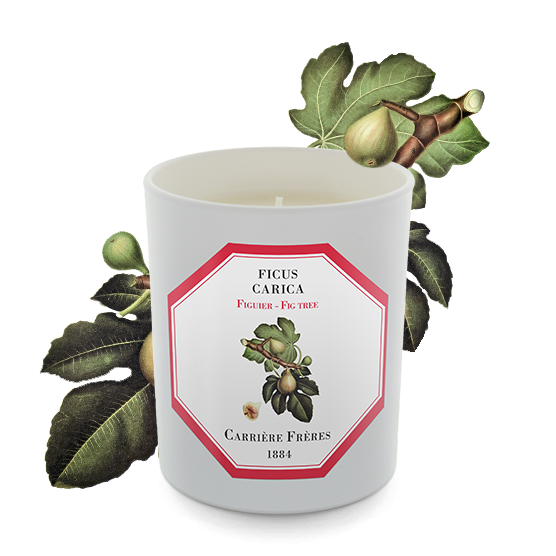 Carriere Freres Fig Tree Candle 185g
