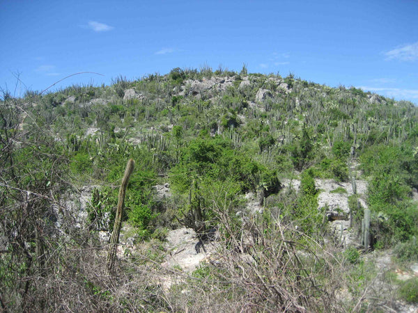 The Dry Cacti Laden Hillsides of Anse a Pitre B. Trauth 2013