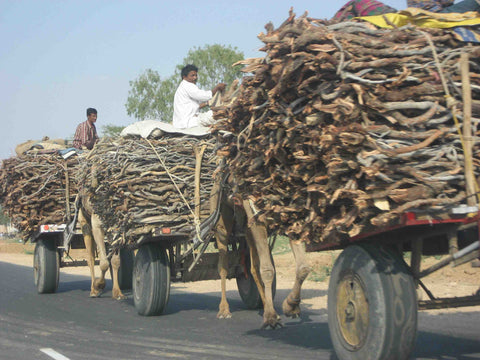A camel caravan delivering wood to markets in Rajasthan India – B. Trauth