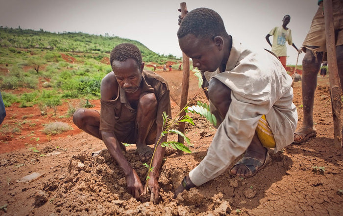 Tow Men Planting Trees For The Future