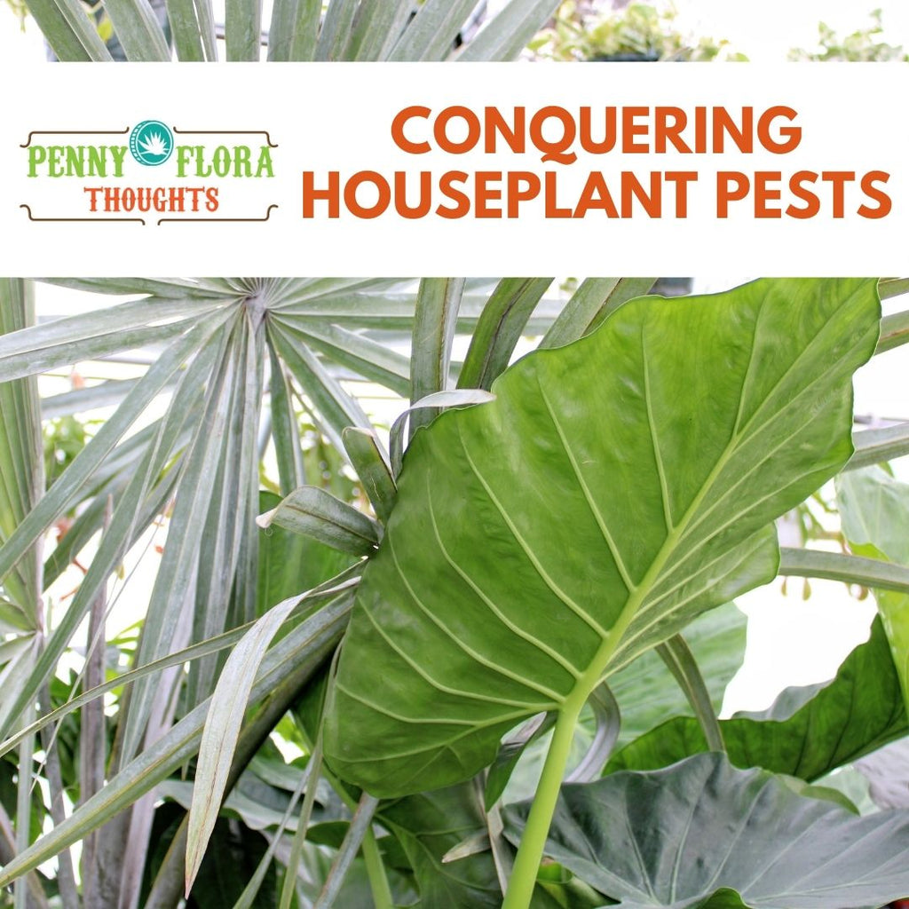 Conquering Houseplant Pests