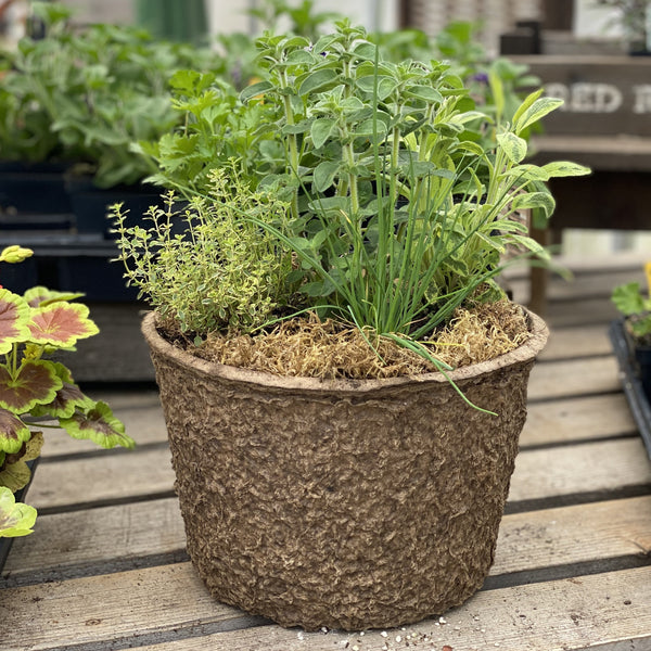 Culinary Herb Planter