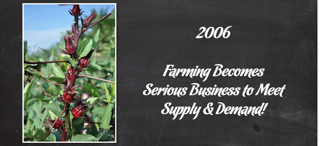 Hibiscus Farming Gets Serious Business