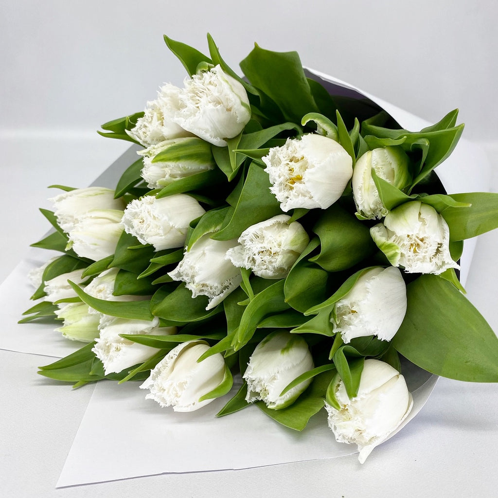 FRINGED TULIPS: White