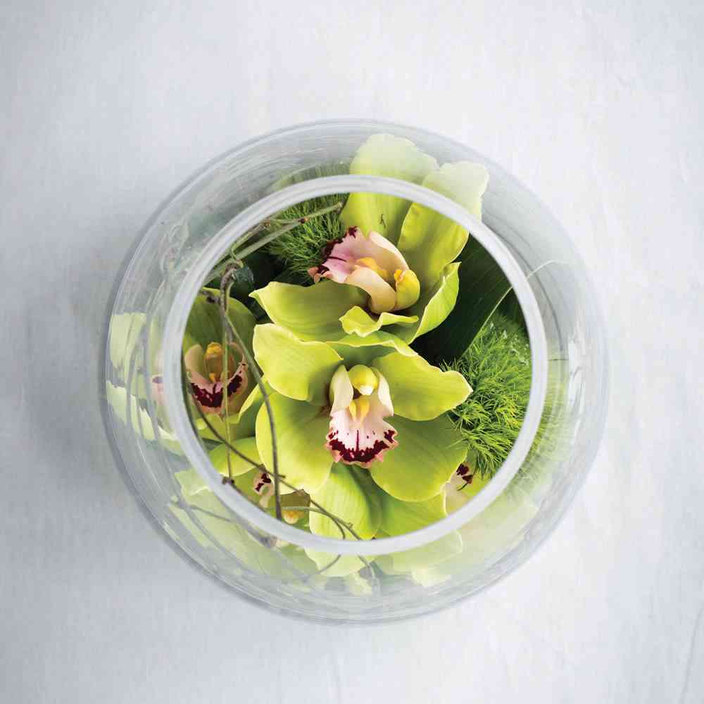 ORCHID BOWL: Bright & Cheerful