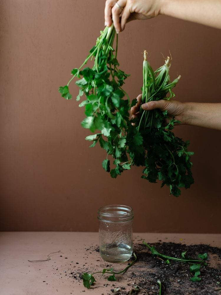 SETTLER SEEDS: Herbs - Parsley