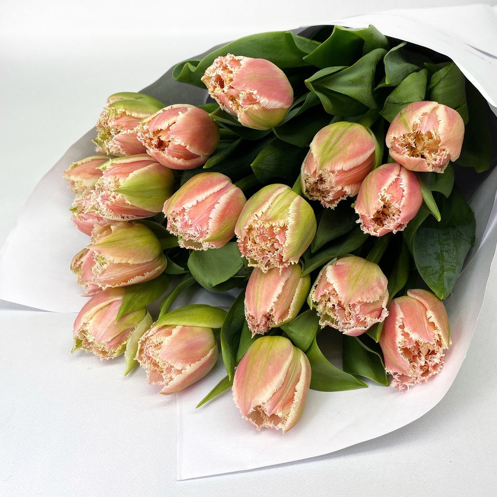 FRINGED TULIPS: Pink