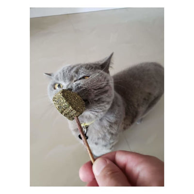 Catnip Stick Teeth Cleaning Chew Toy - Cat Toy