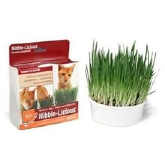 Petlinks Nibble Licious Grow Kit - Catnip