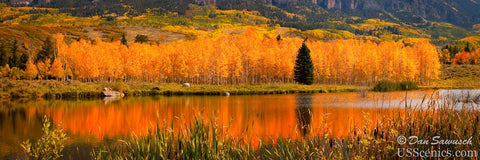 Yellow and orange aspens with a evergreen tree near a pond