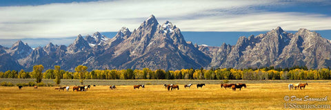 Horses grazing in Grand Teton National Park near Jackson Hole, Wyoming