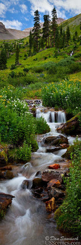 Summer waterfall in Yankee Boy Basin with flowers near Ouray, Colorado