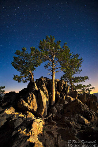 A night photo with stars at a tree on trail ridge road in Rocky Mountain National Park near Estes Park, Colorado