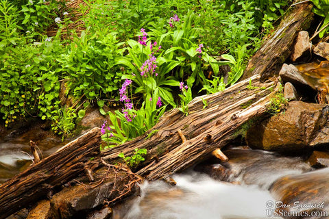 Pink flowers grow near a log in a river