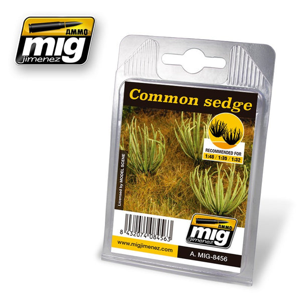 Common Sedge