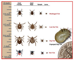 Type of Ticks
