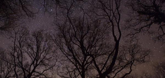 stars and winter trees