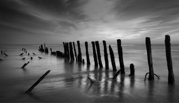black and white groynes