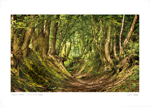 sunken path brede high wood poster