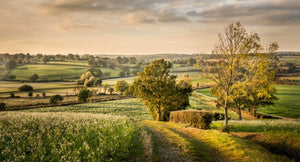 autumn fields near tenterden canvas