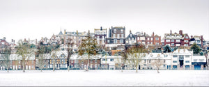 rye in the snow from the salts