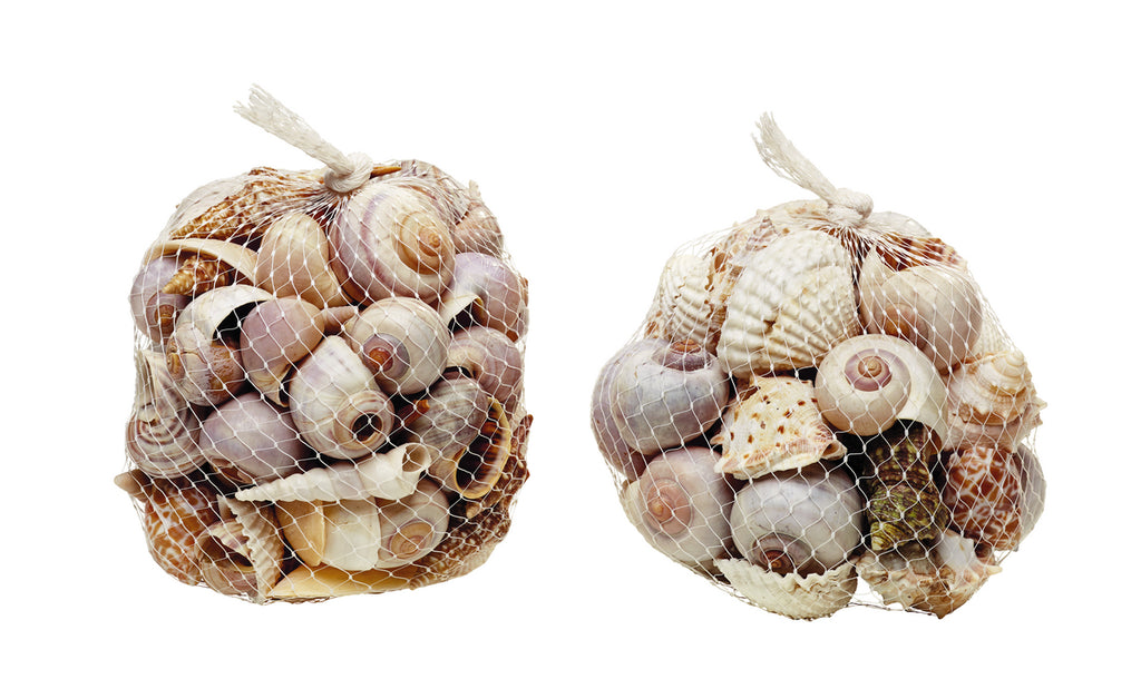 Bags of Assorted Life-Like Sea Shells - Set of 2