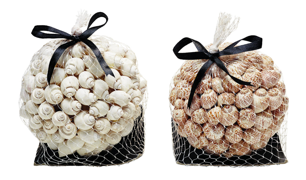 Bags of Life-Like Sea Shells - Set of 2