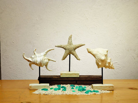 Three Shells On Stands - Set Of 3 - Beach Seashell Ocean Tabletop or Shelf Decor
