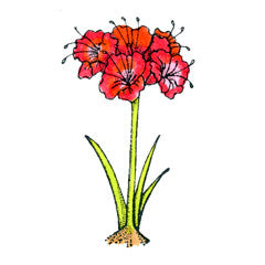 Amaryllis Rubber Stamp