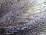 """Glycerined vulture feathers"" quills: rhea in blue gray"