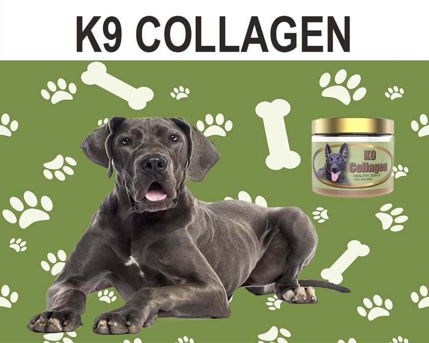 Best Hip & Joint Supplement from K9Collagen for Your Dog: A Review