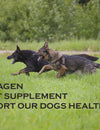 K9 Collagen Healthy Joints: Best Dog Joint Supplement