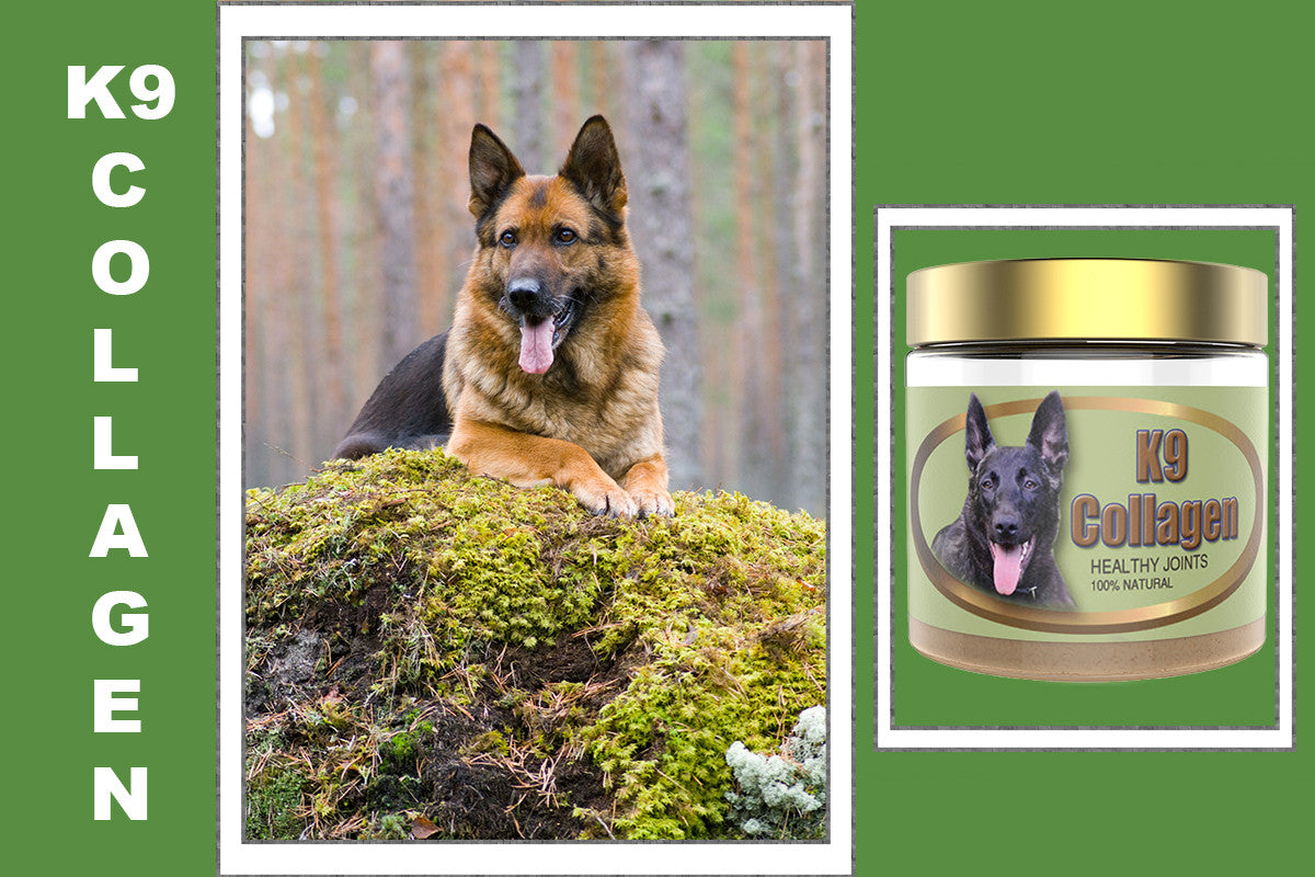 K9 Collagen Hip And Joint Supplement For Curing Joint Pain Dogs