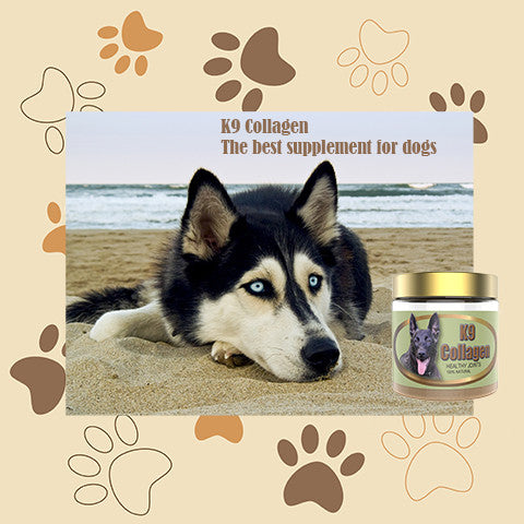 The Best Supplement for Dogs- K9 Collagen