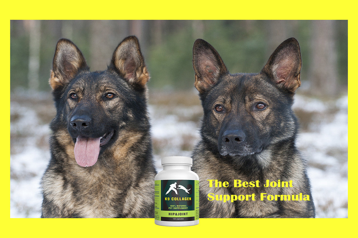 Why K9 Collagen Hip and Joint Supplement Is The Most Effective Dog Vitamins For Joints?