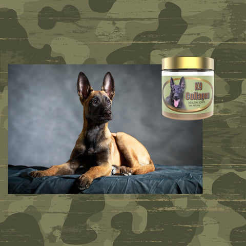 pet joint supplement for dogs