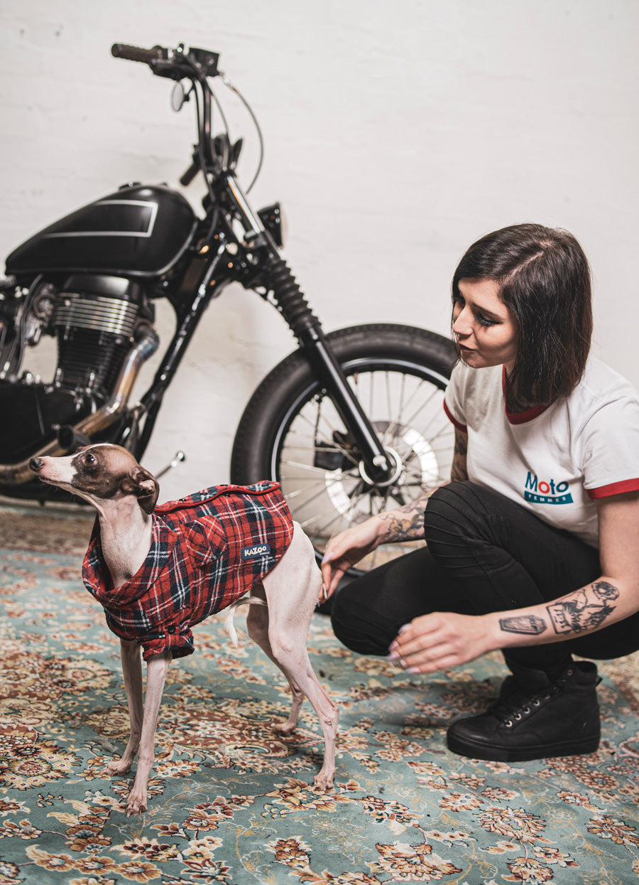 motorcycles and dogs