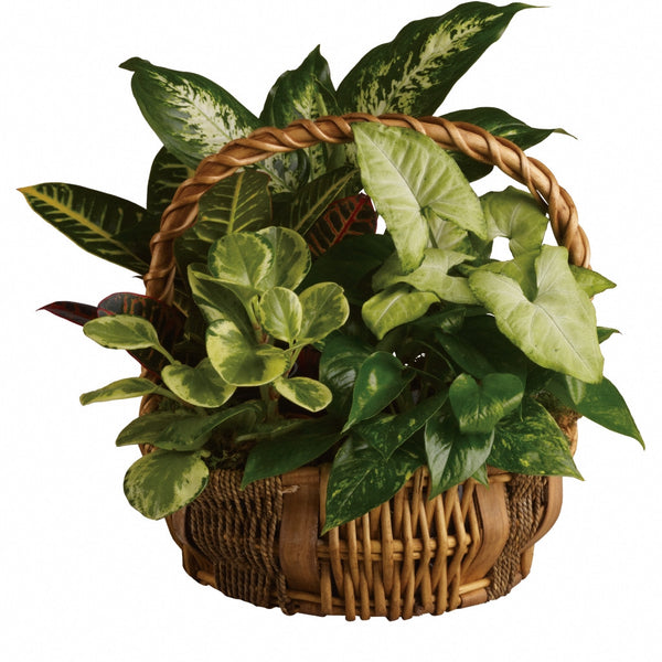 (display image: Emerald Garden Basket)