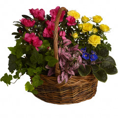 Buy Blooming Garden Basket