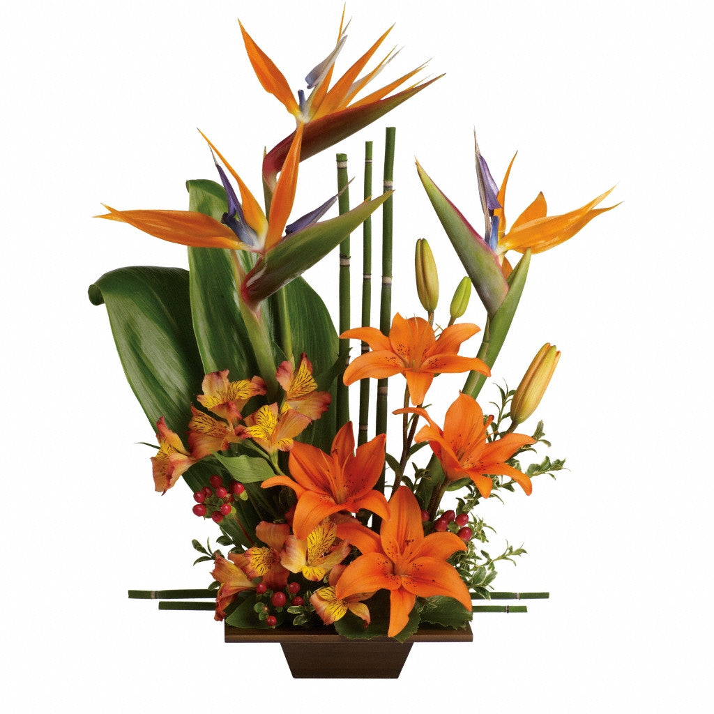 (display image: Teleflora's Exotic Grace - Premium)
