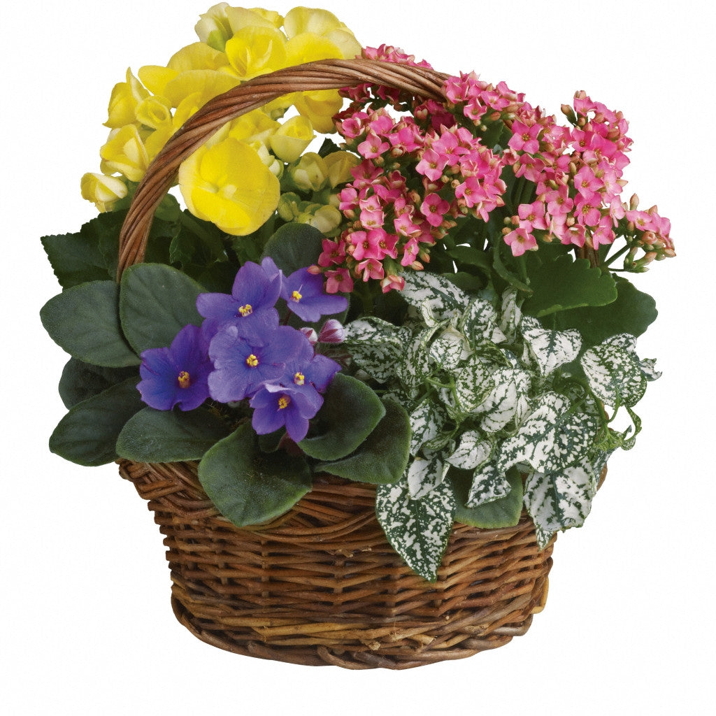(display image: Spring Has Sprung Mixed Basket)
